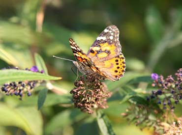 National Donor Memorial Butterfly Garden